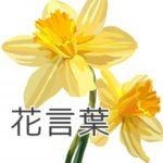 黄スイセンの花言葉