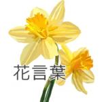 黃スイセンの花言葉