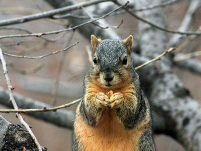 ナッツを食べるリス